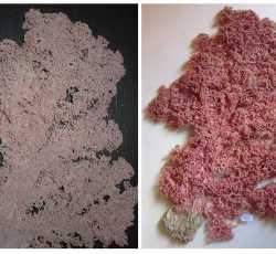 Koralle.jpg